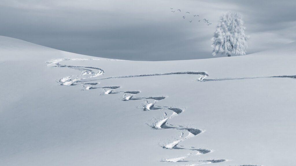 La responsabilità civile del gestore delle piste da sci può involgere sia la responsabilità contrattuale che quella extracontrattuale.